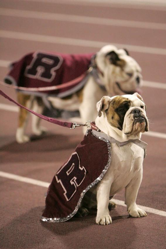 Sadly, former mascot Duke (2003-10) passed away this morning at the age of 11. He will be missed. http://t.co/OwkkwUJRIz