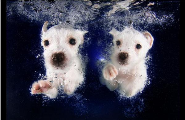 9 Ridiculously Cute Underwater Puppies: http://t.co/hmmEyZhHae (You're welcome, internet.) http://t.co/NZczwHTxS5