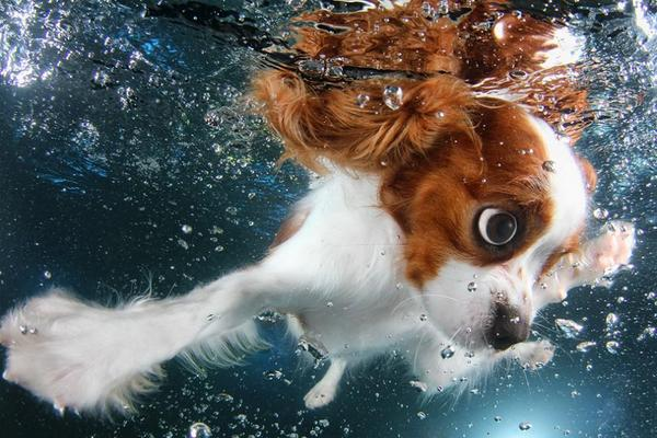 .@Underwater_Dogs just got better. Check out #UnderwaterPuppies! http://t.co/Op4heEyDWV http://t.co/12x7q7ul7K