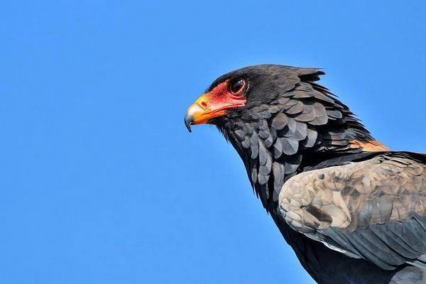 """(•ө•)""""@bezokuGon: この鳥は首の羽がなぜか大雑把。""""@CordeiroRick: """" @ybh4618 http://t.co/eQVpJiPkUI"""""""""""""""