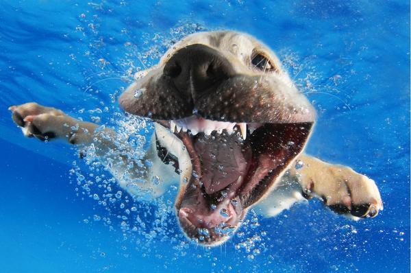 .@LTLFriendsPhoto Seth Casteel you are hilarious and awesome. Puppies underwater is great!  http://t.co/T9Xd7wfEBt http://t.co/ZjYf9X5ybo