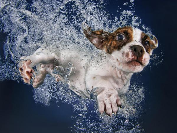 So much for the hard news.  Most popular story overnight? Swimming puppies.  http://t.co/lLYz788sU2 @LTLFriendsPhoto http://t.co/fOayFNpXhM