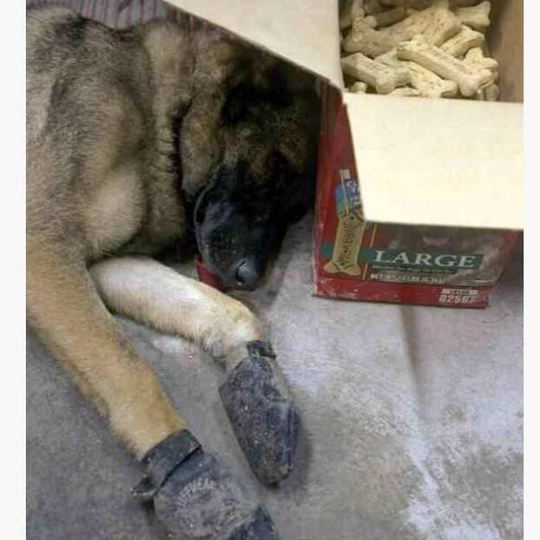 Resting after a 20-hour search through debris for victims. #neverforget911 http://t.co/nuBFrxReed