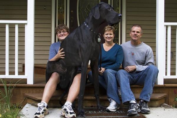 Fallece Zeus, el perro más grande del mundo, a los seis años http://t.co/o3ispMhvOB http://t.co/dBT5vX4T8r