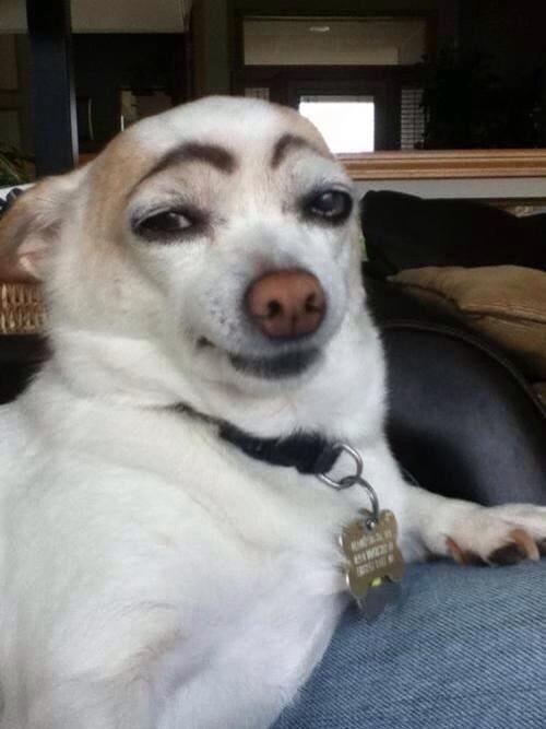 RT @tambritton: Can't stop laughing at this dog that looks like Alistair Darling. #indyref http://t.co/XUrFgFk9es