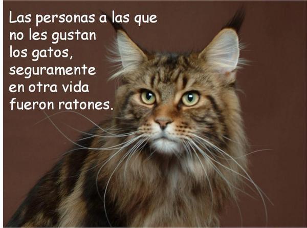 Kattos Solo Gatos On Twitter Feliz Día Del Amor Y La Amistad A