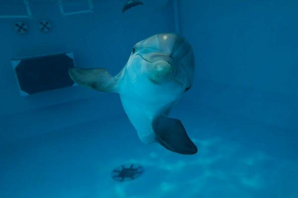 #DolphinTale2 is now playing! Have you been to see @WinterDolphin & #HopeDolphin? #WinterHasHope http://t.co/FmhokH4Jei