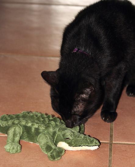 @kittehboi @LilyLuWhoT @OneWhiteDog @CinniMini2 I got myself another croc! http://t.co/UZfDZxLKvN