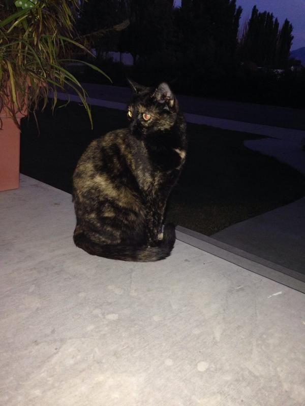 So beautiful. She is chillin' with me on the porch. #cats http://t.co/oX7UlN2WNk