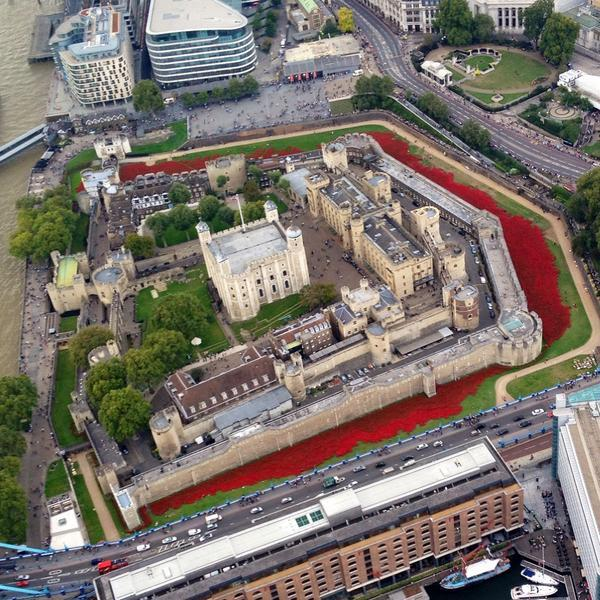 #towerpoppies - all 3 sides of the moat growing fast! @COBSEO @CombatStress @HelpforHeroes @PoppyLegion @SSAFA http://t.co/eumzW5ZLpe