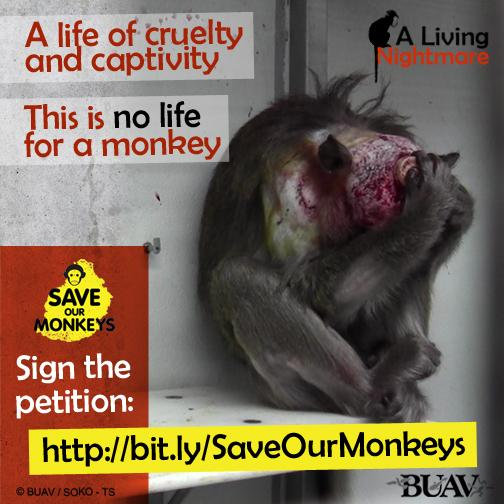 Please RT if you want to see an end to the export and use of Mauritius monkeys in research: http://t.co/GZHn1KFzew http://t.co/gzLLC9jx07