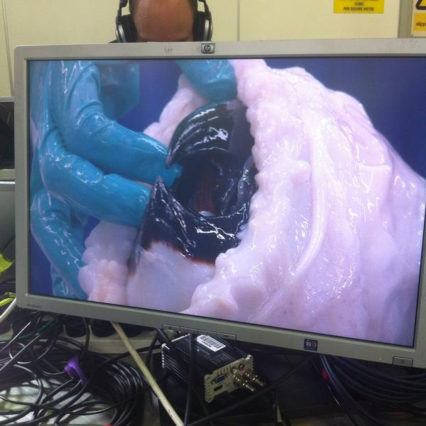 Watch scientists cut open a colossal squid and find eggs inside
