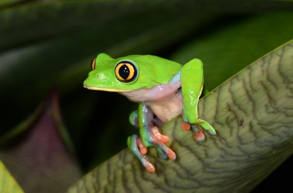 #IAmANaturalist because there are amazing creatures under every leaf! http://t.co/7AdUHHssWk