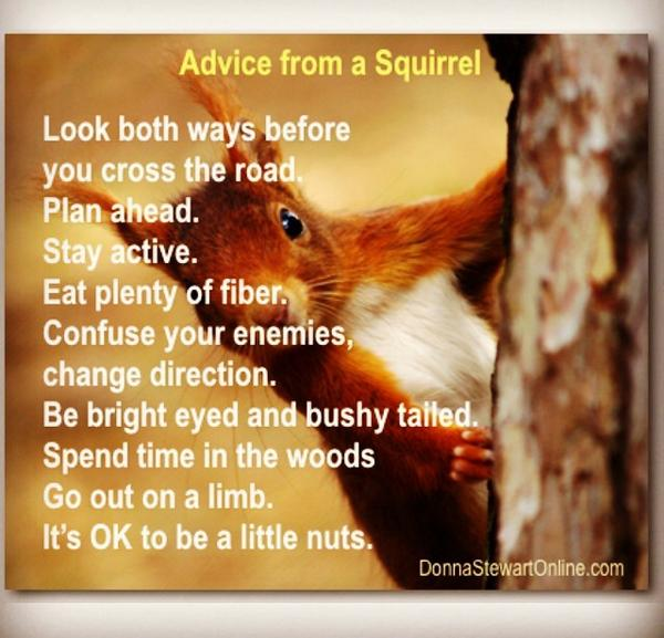 Image result for sunday red squirrel quotes