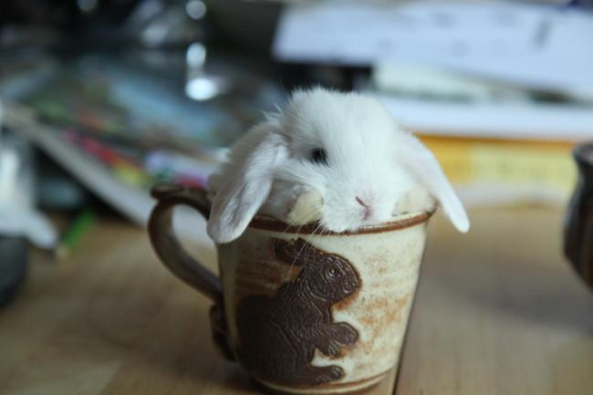 RT @BuzzFeedAnimals: Sorry, you can't have your coffee this morning. http://t.co/GatIIkMIOe