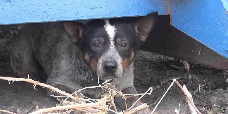 Feel Good Moment Of The Day: Abandoned Dog Rescued After Living Under Dumpster For 11 Months http://t.co/StuilflwfC http://t.co/zAXxnhUxcX