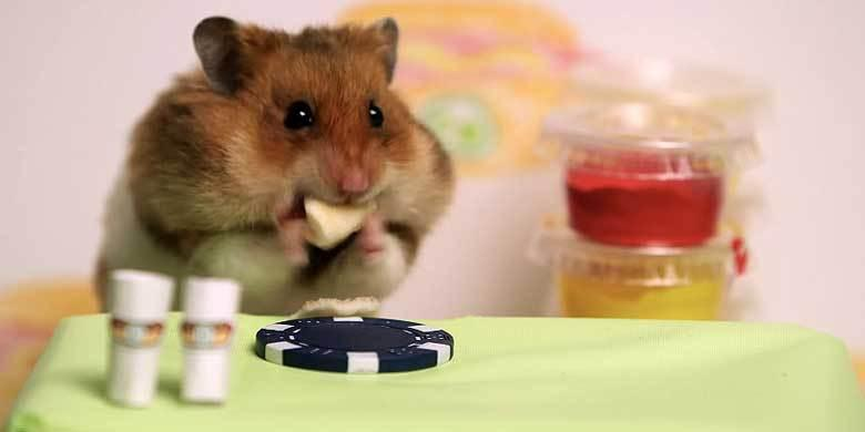 Competitive Eater Kobayashi Battles A Tiny But Hungry Hamster—Who Will Win? http://t.co/0ywTNOv7tV http://t.co/ZmFRdNhHaN