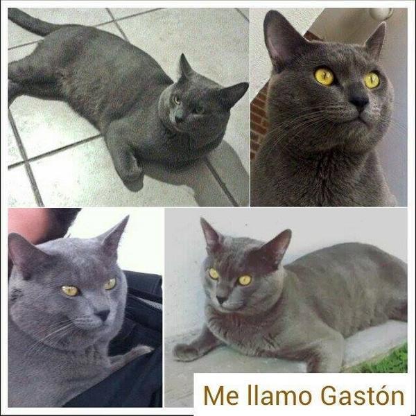 Desde hace quince días lo buscan, vive en Santa Cruz Buenavista. #Puebla Nos ayudas? http://t.co/rTNO2kYfg5