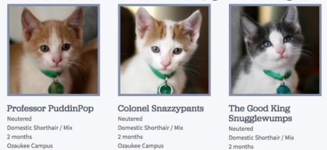 RT @evilpez4: Whoever's naming the adoptable kitties at the SPCA is on fire. http://t.co/SUdACXkwcf