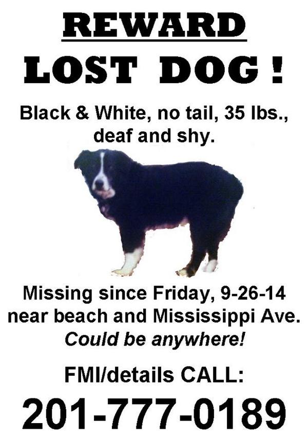 Hey #LBI help find Cooper.. please retweet. #Lostdog #NJ #jerseyshore http://t.co/MciBjWZNv7