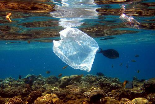 Great news indeed! California becomes 1st state to ban plastic bags http://t.co/MmII7GKpLi http://t.co/iV84PmDTsD