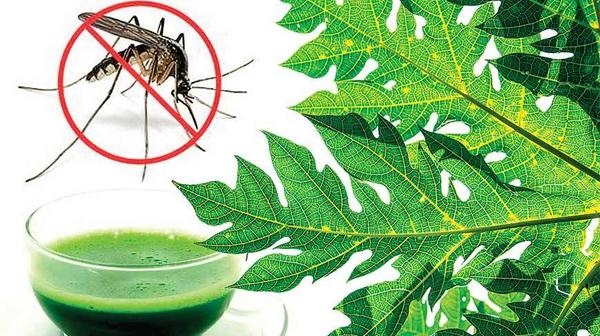 Natural Mosquito Repellents and Remedies to Ease Chik V Symptoms » Irie Diva Style http://t.co/jW95MU1uAn http://t.co/MKaogi9GRD