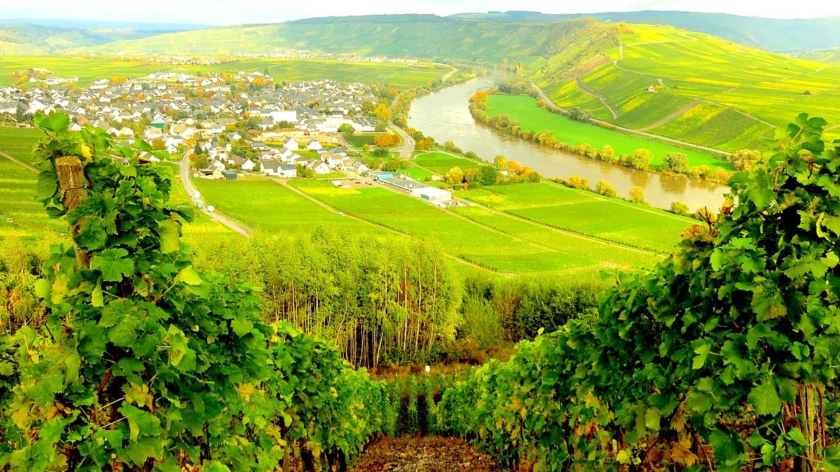 The river Mosel close to the village of Leiwen in Germany