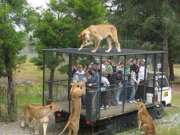 RT @AudrinaDaily: Saw this & thought @joannakrupa RT @GabiGutierrez22 @BBAnimals  The correct way to see Wild Animals! Let them be free htt…