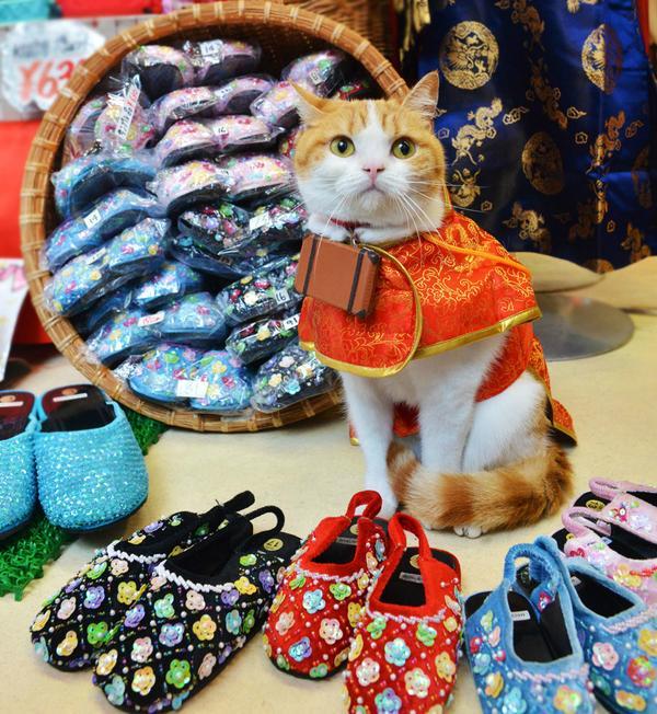 どにょ靴がおすすめですかにゃ? pic.twitter.com/TptdaEpAN0