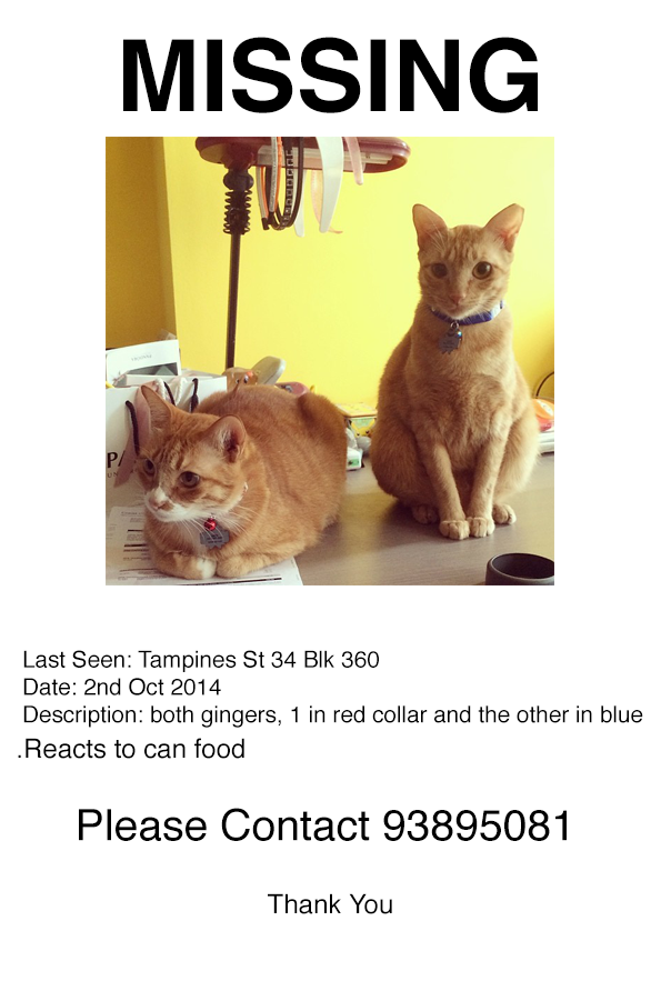 Both my cats went missing! Here is a posters pls share! And for more details about them: http://t.co/q7ctadEQTr http://t.co/y1kK6WwQvt