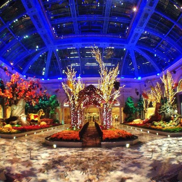 Take a stroll through The Conservatory! http://t.co/FoGcPZvkOU
