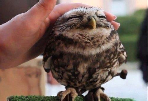 well done owl