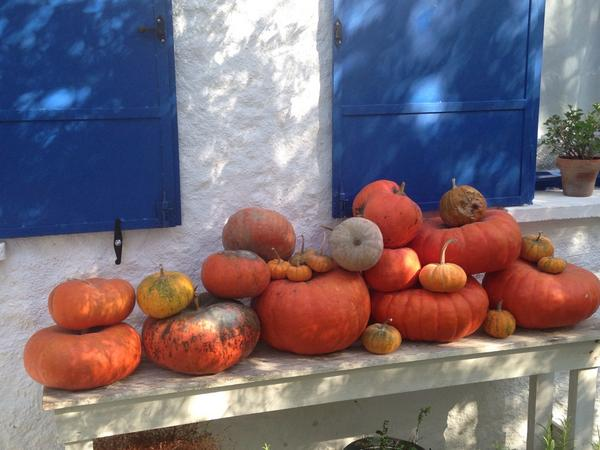 The pumpkin season in Turkey http://t.co/WbYdiWD629