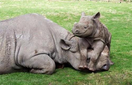 Happy world Rhino day!! http://t.co/cYhoKd9OTA