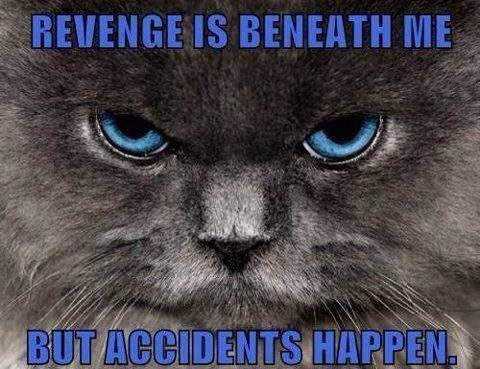This makes me giggle .. And reminds me of @CLAIREECOOPER cat x http://t.co/8LtsfbmnT5