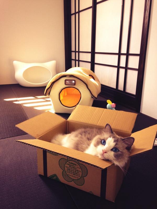 ふかふかのにゃんこハウスは2500円したし、一番後ろのねころんは7000円もしたんだよ。ダンボールが一番好きか〜そっか〜… pic.twitter.com/houa419BeV