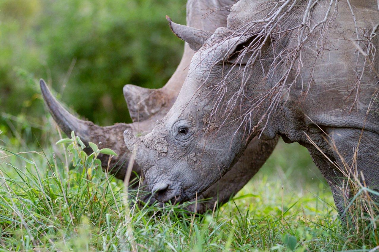 RT @richardbranson: It's World Rhino Day - read how drones could be used to stop poachers http://t.co/6PmhZ50h5G #drones4good http://t.co/l…
