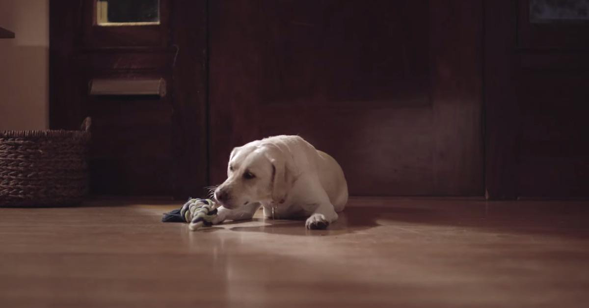 [Very moving!] Take a look at the latest ad by @Budweiser via @mashable!  #FriendsAreWaiting  http://t.co/VGSziLm0Tw http://t.co/VlqK32uUlP