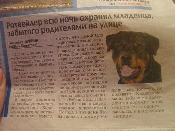 Собаки лучше людей http://t.co/TrWZg2yQqD