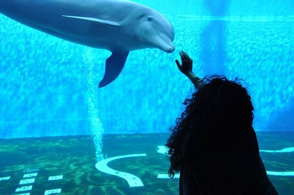 In fondo al mar #acquariodigenova #Delfino #love http://t.co/XbVcGAdgpx
