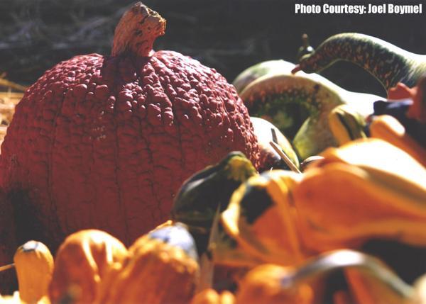 Pick the perfect pumpkin! Find pumpkin patches and corn mazes at http://t.co/4QHAA1mch7 #Fall #Cornmaze #Pumpkins http://t.co/jFAaVcXUcx