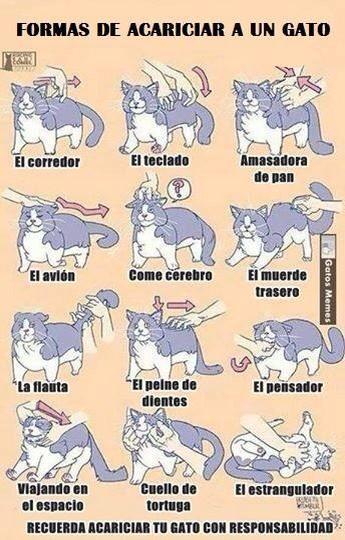 Formas de acariciar a un gato #catlover  Cc. @pilijimenezr @RomiRojasC @kurOtashiO http://t.co/vuAUiYKmfH