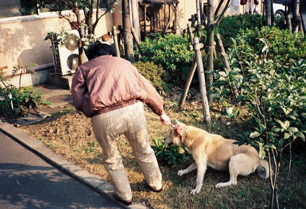 「マンションに引越しが決まり、車で飼い犬を放棄に来た。主人を信頼してついてきた犬は所内から聞こえてくる多くの犬たちの声の異様さに気づいて、足を踏ん張ってささやかな拒否」 写真・文章は 関西動物友の会より https://t.co/QzIgrWJFp4
