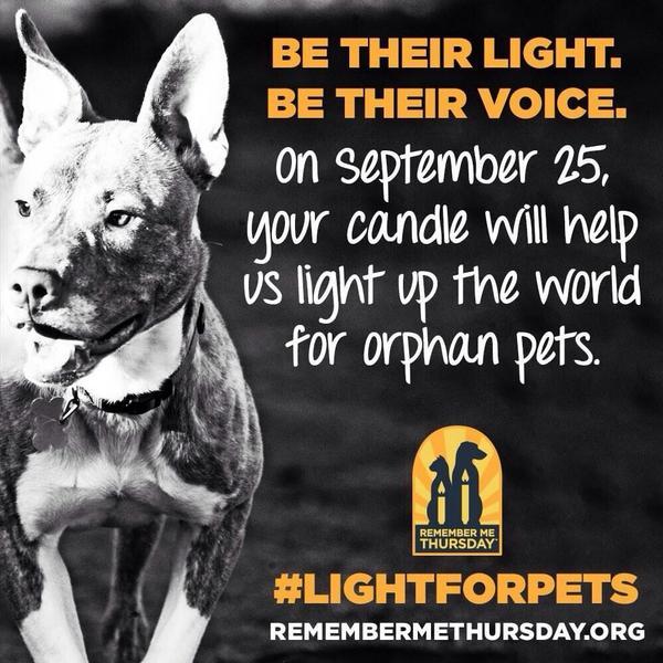 """@EstherThePig: Adopt don't shop. Speak up for orphaned pets today. #BeTheirLight #BeTheirVoice #LightForPets http://t.co/THXRWaE9Eb"""