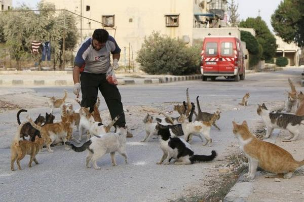 ❤️ ❤️ ❤️ Remarkable Man Feeds The Homeless #Cats Of War-Torn Syria! http://t.co/cJqnVisGwU  #anipals http://t.co/st8oEwqSF4