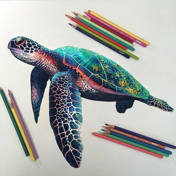 Artistic Ideas On Twitter Sick Turtle Drawing Http T Co