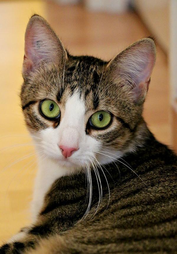 Adopte un mec chat