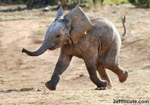 #stoptheslaughterofelephants  We're facing a future without elephants.  http://t.co/iIEm5yOgZd  @TheWCS Please RT ' http://t.co/LM2NiZK0Jl