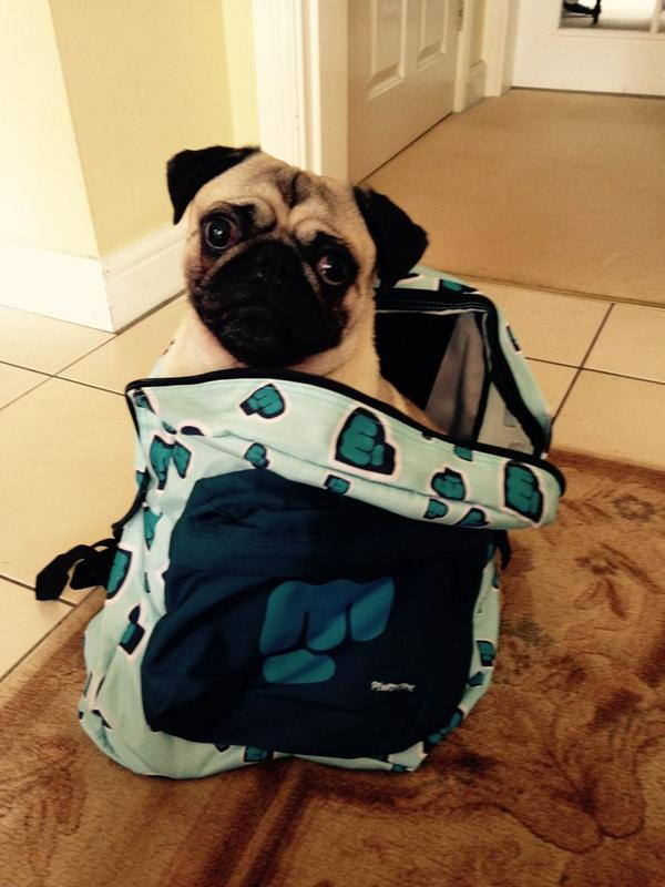 @MakerShopUS it's arrived @pewdiepie backpack, pug not included! Thank U for help! http://t.co/MUlNzsRxU0