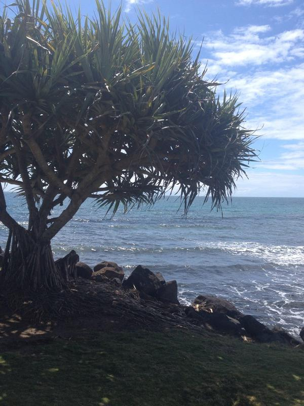 This morning's view at Bargara Beach #thisisqueensland http://t.co/e14nrkkxVX